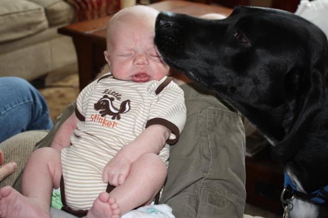 Puppy_lovin